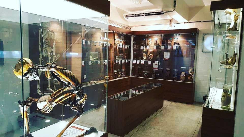 Museu de Anatomia da UFPA